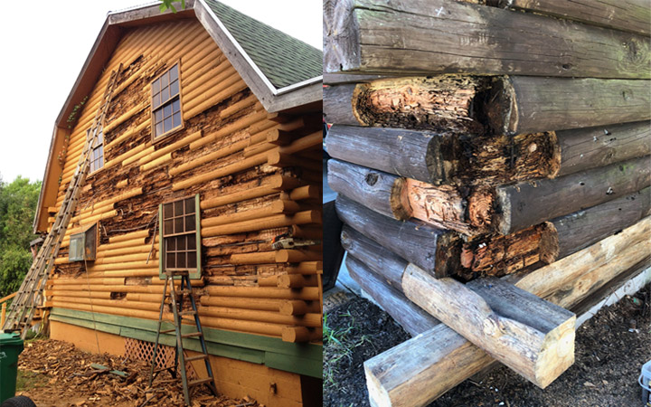 cabin rot decay